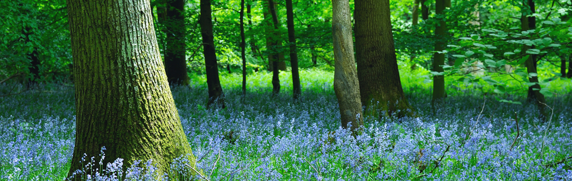 Forest of Dean Gloucestershire B&B