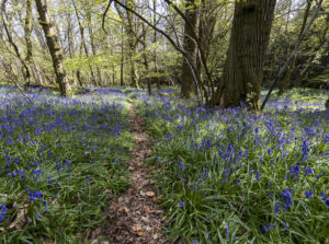 The Gloucestershire Way Forest of Dean