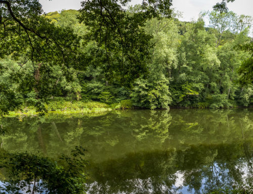 All You Need for a Walking Holiday in the Forest of Dean