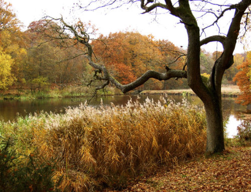 Autumn Colours and Woodland Walks in the Forest of Dean